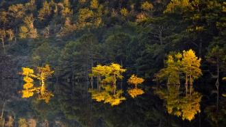 _Beavers Bend_Reflections_3094