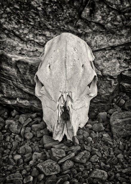 _Green Country Skull_2506bw