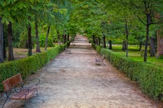 An empty path in Parque de El Retiro in Madrid, Spain.